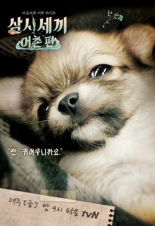 """「三食ごはん」のマスコット犬、サンチェの可愛さに視聴者の""""関心集中"""""""